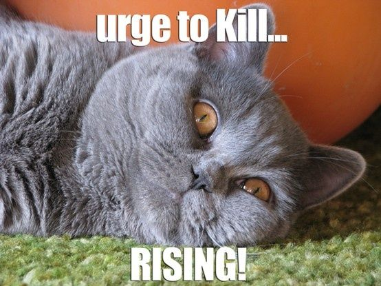 94 best Cat sayings images on Pinterest Funny animals Funny things and Cats