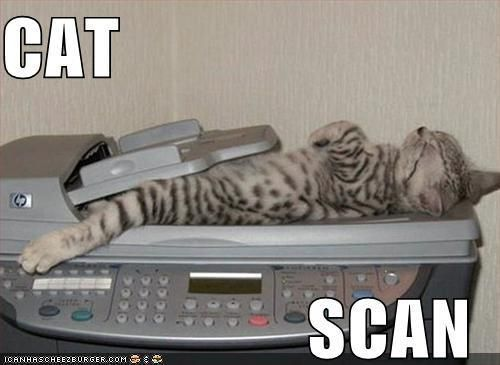 Hubby had a CAT Scan the other day I told him to say hello to the kitties =