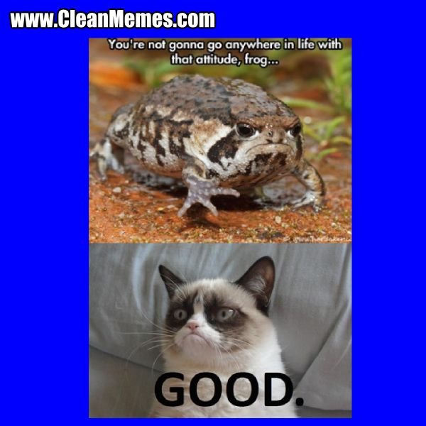 Collect the Beautiful Funny Cat Videos Memes