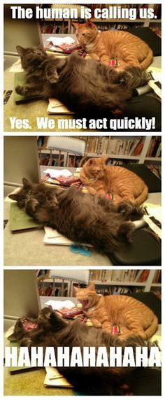 I don t need your sarcasm cats…