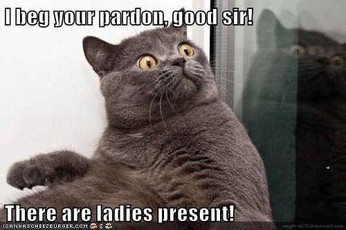 Funny Rude Cat Memes