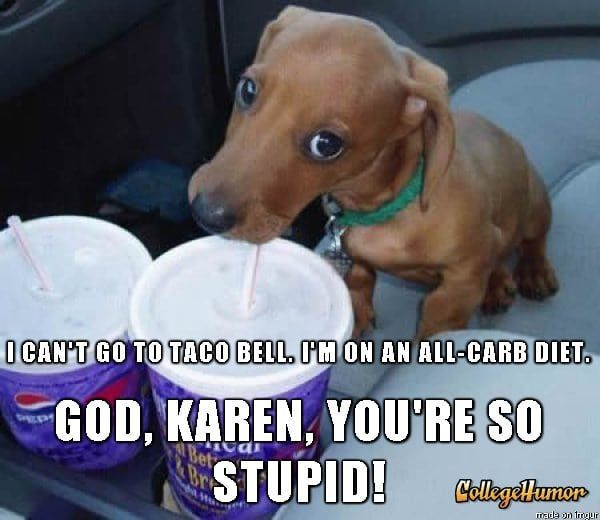 30 Dogs Who Are Actually Mean Girls Funny Animal Memes Dog Memes Funny Dogs