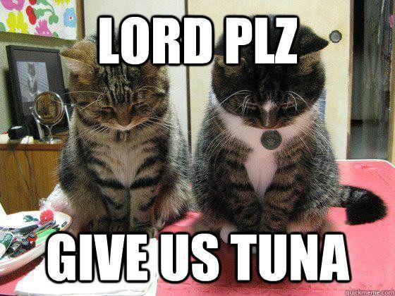 lord plz give us tuna Praying cats