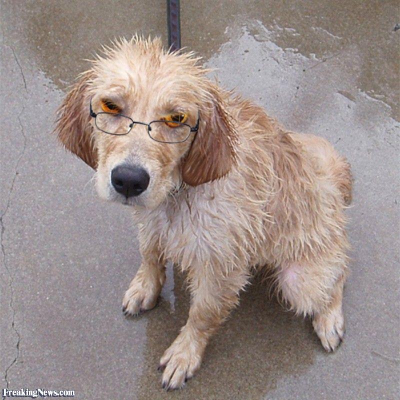 Wet Dog with Cat Eyes