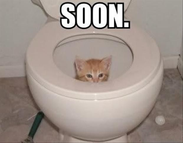 Collect the Best Of Funny Animal Pictures for Bathroom