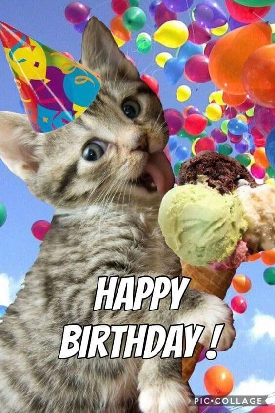 Happy Birthday Funny cat eats ice cream says happy birthday