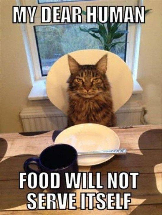 Funny Thanksgiving Cat memes
