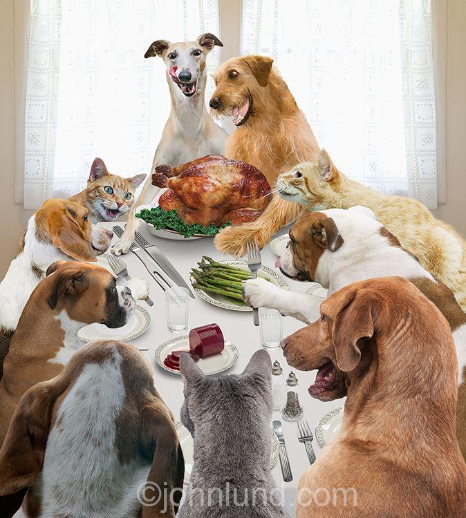 Thanksgiving Pet Dinner
