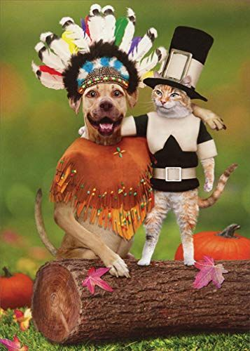 Amazon Dog and Cat Friends Funny Thanksgiving Card Recycled Paper Greetings fice Products