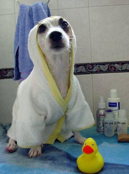 dog bath clothes