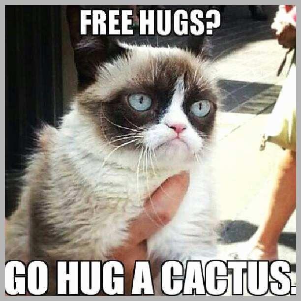 Crazy Cat Memes New 10 New Grumpy Cat Memes Crazy Cat Memes Admirably Funny Cat
