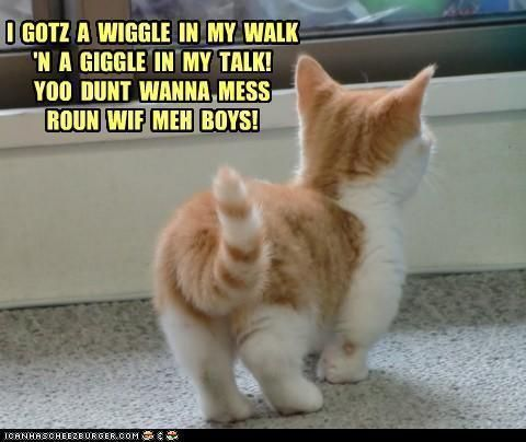 Funny never looked so cute images cat fun wallpaper and background photos