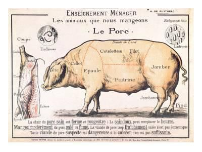 cuts of pork illustration from a french domestic science manual by h de puytorac 19th century u L P94TAI0