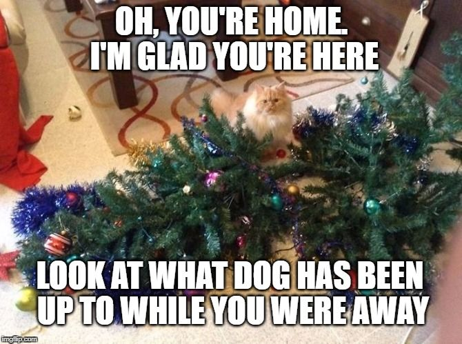 It was so funny So in honor of my cat and the Christmas Tree I thought I would share some funny cat memes I found on the internet