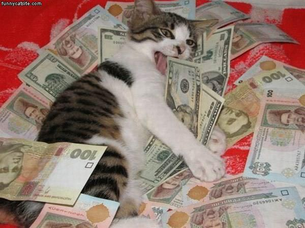 Cat in the money 600x449 Funny cats money