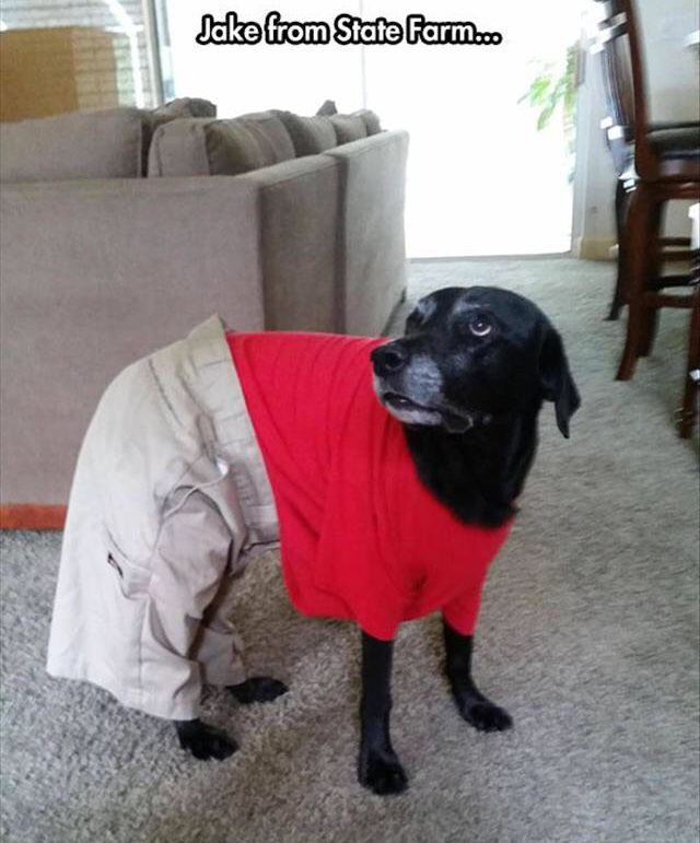 Jake From State Farm Scarred For Life Life Page Khakis Funny Dog