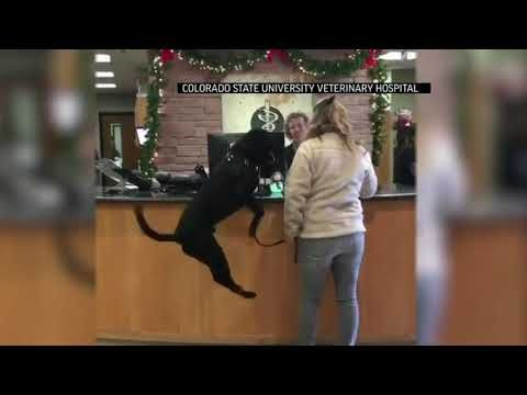 Jumping dog oddly excited to see veterinarian
