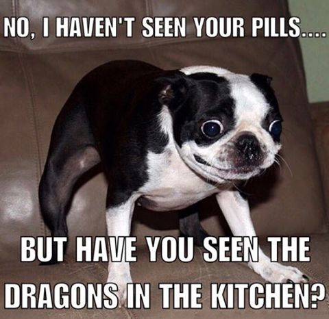 Drugs Humor Animal Funny Dog Memes Cat And Dog Memes Boxer Memes