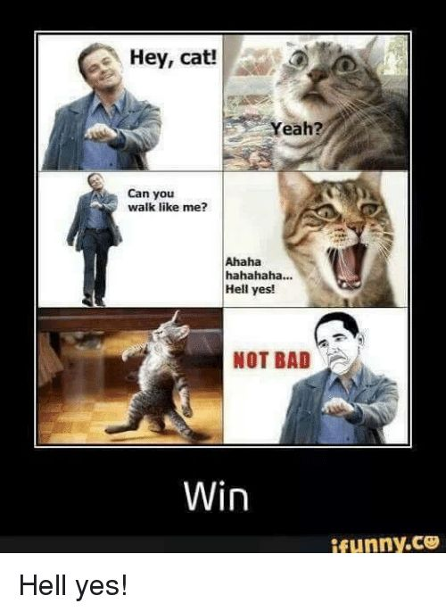 Bad Funny and Hell Hey cat eah Can you walk