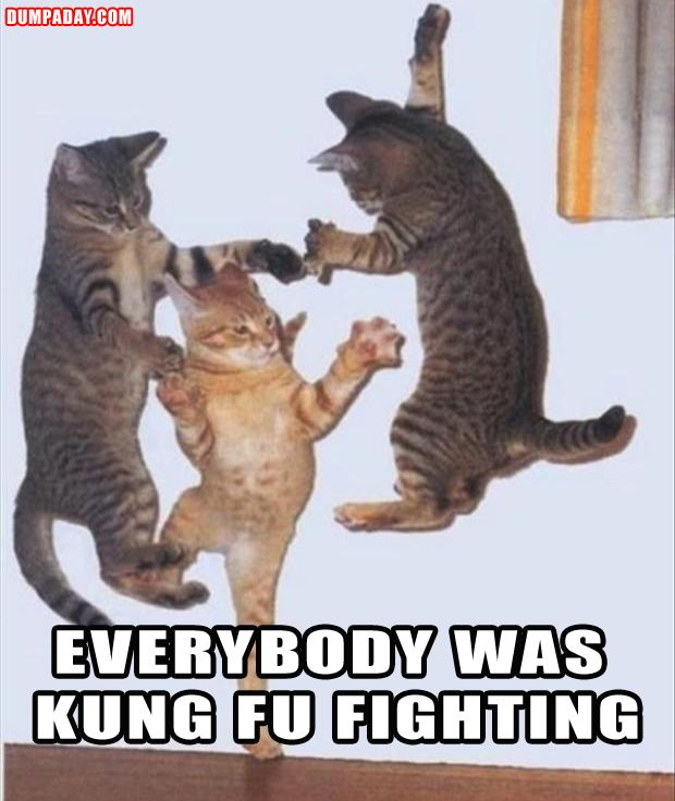 funny pictures kung fu fighting cats