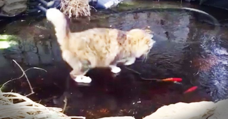 image godvine cat chases fish in frozen pond
