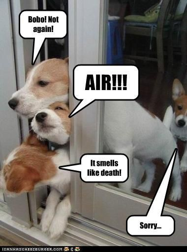 Dogs escaping from toxic fart Funny dog photo with captions