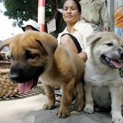Residents Must Stop Eating Dog And Cat Meat To Avoid Spread Rabies Authorities Say