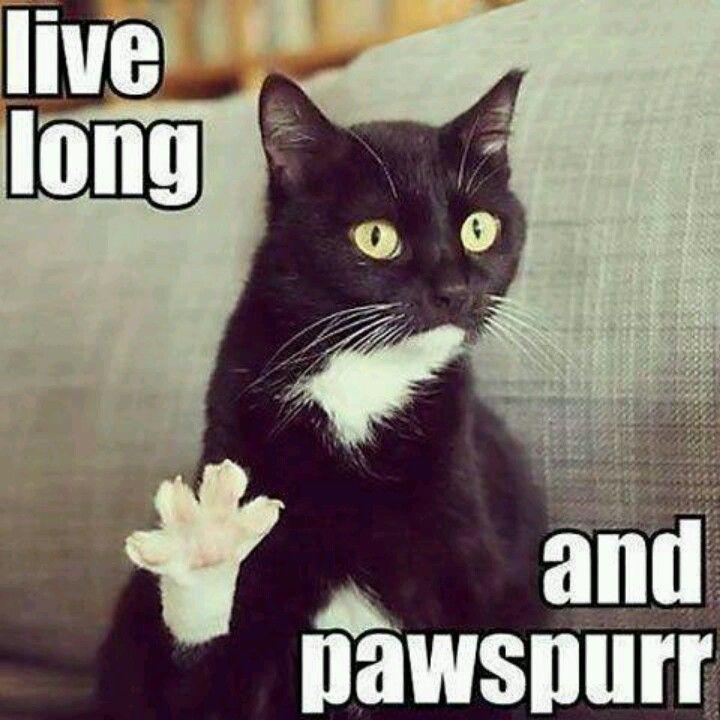 """Live long and pawspurr"" funny cat Star Trek"