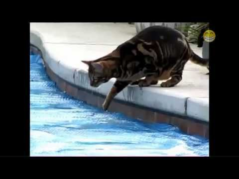 funny cats in water pilation 2014 youtube