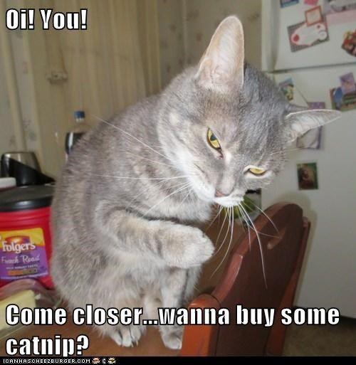 catnip s secret sell street