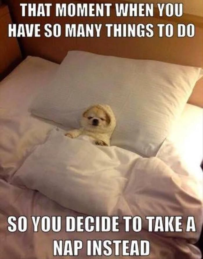 Funny Animal The Day 25 Pics My Kind of Humor Pinterest