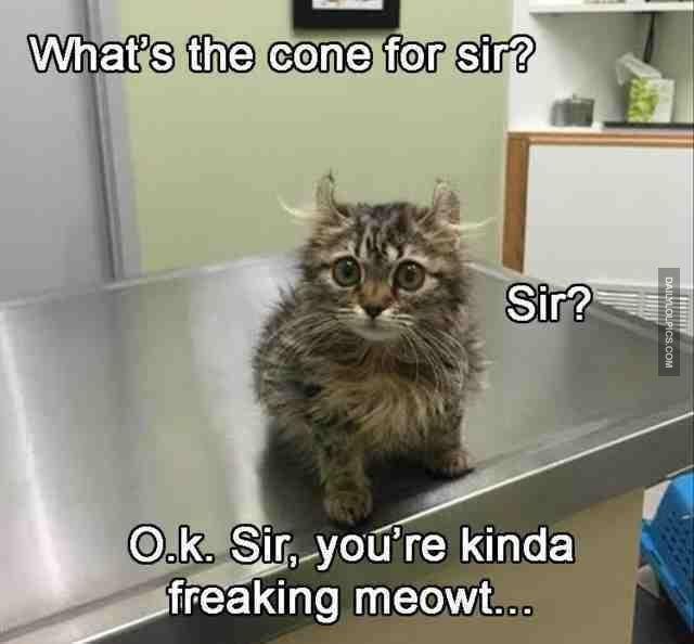 Persian cat Kitten Dog Funny animal Grumpy Cat Meme Image