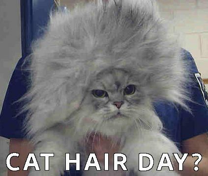 cat cats and funny cat image
