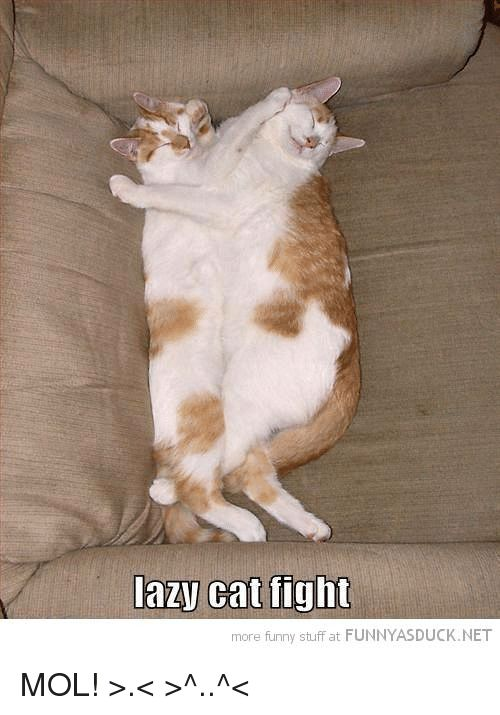 Lazy Memes and Stuff lazy cat fight more funny stuff at FUNNYASDUCK