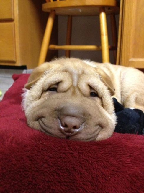 thank you squished smile dog for making my day better
