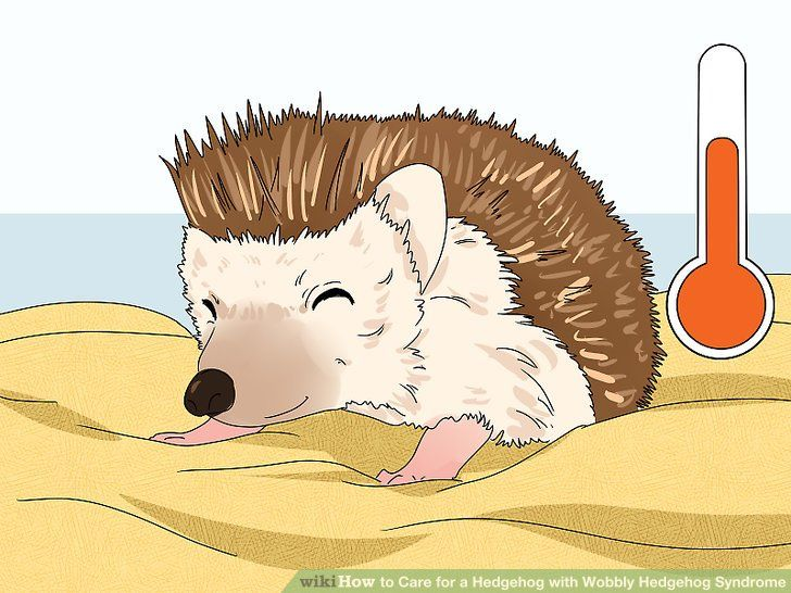 Image titled Care for a Hedgehog with Wobbly Hedgehog Syndrome Step 6