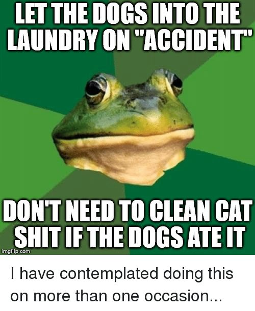 """Dogs Laundry and Shit LET THE DOGS INTO THE LAUNDRY ON """"ACCIDENT DON T NEED TO CLEAN CAT SHIT IF THE DOGS ATE IT imgflip"""