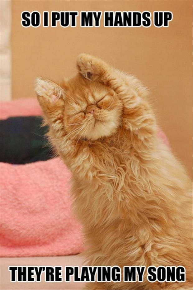 Funny cat pic For the best funny picture jokes visit
