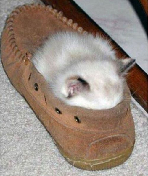 Funny Cat Sleeping In Shoes