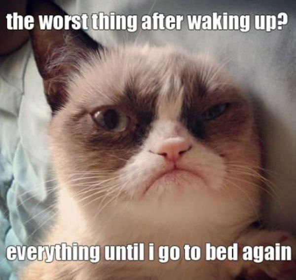 The Worst Thing After Grumpy Cat Meme