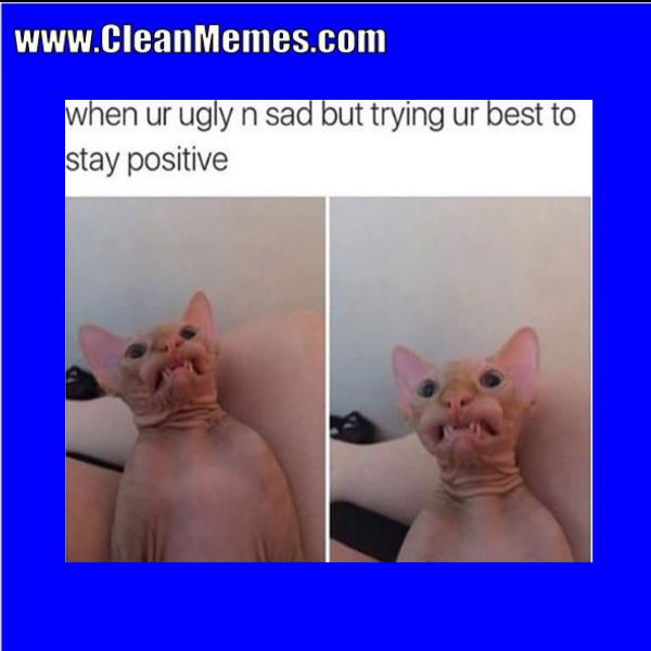 Author cleanmemesPosted on March 10 2017 Format ImageCategories Cat Memes Clean Funny Clean MemesTags Cat Memes Clean Funny