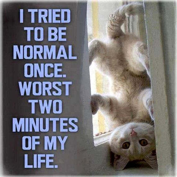 I tried to be normal once worst two minutes of my life Picture Plaque or Fridge Magnet Your Cho