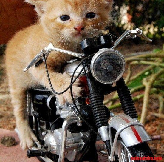Too funny cat