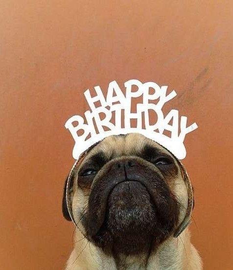 Happy Birthday Message Happy Birthday Messages From Cute Pug Happy Birthday Messages