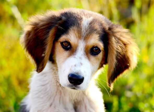 How to Stop Diarrhea in Dogs