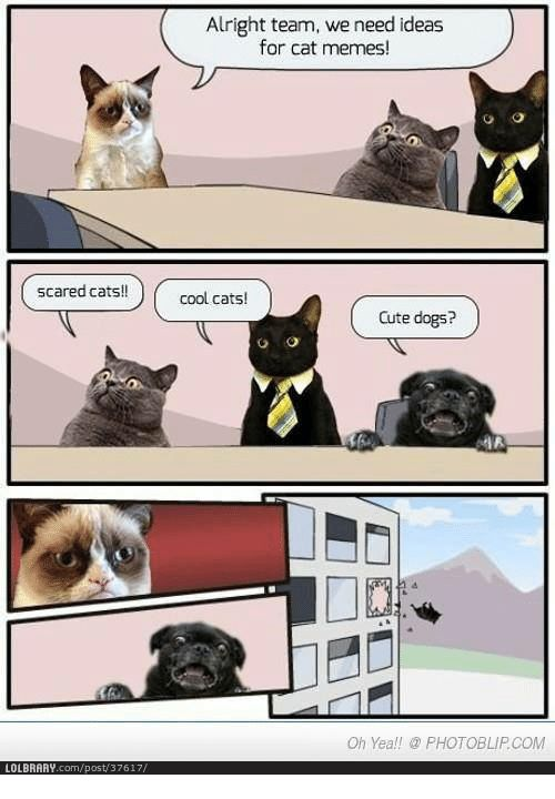 Memes Scare and Alright scared cats LOLBRARY post