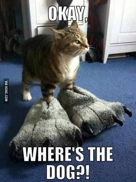 funny cats funny dogs meme cats cat