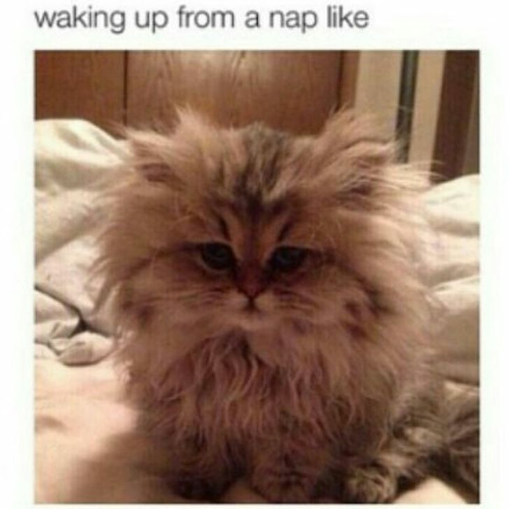 tired exhausted sleepy messyhairdontcare hair sleep funny naps nap cats memes meme lazy funnypics lmfao kitty messyhair funnypictures mylife