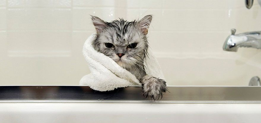 funny wet cats 37