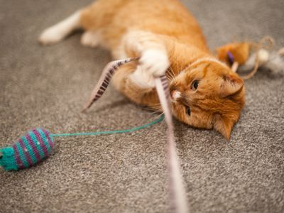 Play With Your Cat to Maximize Your Bond and Improve Its Health